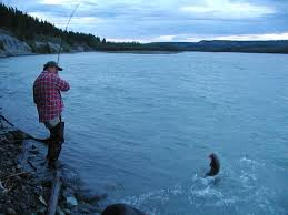 lets go salmon fishing!