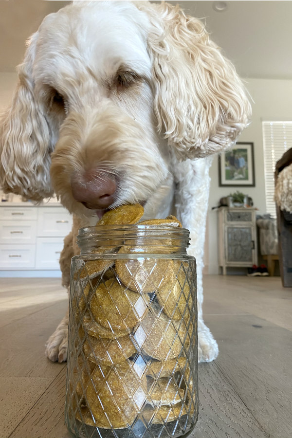 dog eating biscuits out of a jar